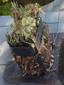 Animal Removal And Chimney Caps